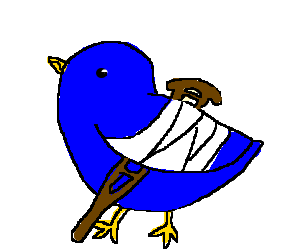 bird with broken wing