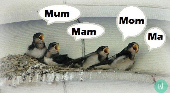 Differences-Ma-Mum-Mom-Mam